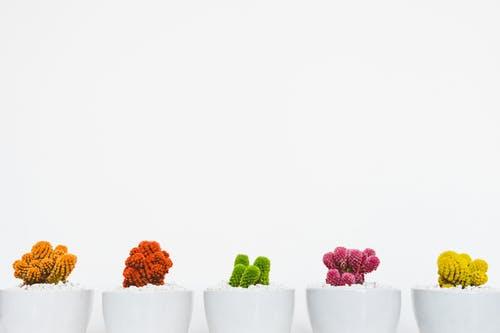 Edible Landscaping: Creating Your Vegetable Garden